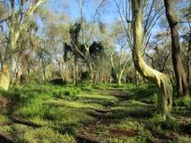 forêt d'arbre de feever Image libre de droits