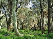 Forêt d'arbre de Feever Images libres de droits