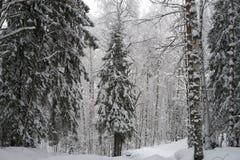Forêt d'arbre de fie d'hiver complètement de neige Photos stock