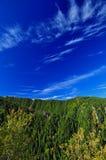 Forêt d'arbres verts Images stock