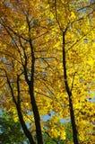 Forêt d'Authumn image libre de droits