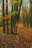 Forêt d'automne - 1 Photo libre de droits