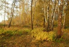 Forêt d'automne. Images libres de droits