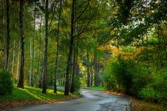 Forêt d'automne Photographie stock