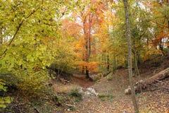 Forêt d'automne Photo libre de droits
