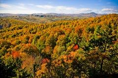 Forêt d'automne Image libre de droits