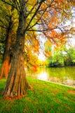 Forêt d'automne Images libres de droits