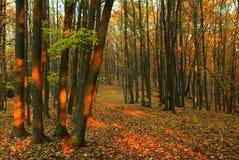 Forêt d'automne - 2 Photos libres de droits