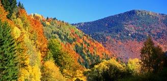 Forêt d'automne image stock