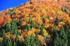 Forêt d'automne photographie stock libre de droits