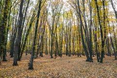 Forêt d'automne au coucher du soleil Images stock