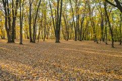 Forêt d'automne au coucher du soleil Photo libre de droits