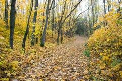 Forêt d'automne au coucher du soleil Photographie stock