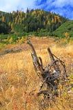 Forêt d'automne au dolina de Ziarska - vallée dans haut Tatras, Slovaki Images libres de droits