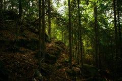 Forêt d'automne avec des arbres et des pierres dans la réservation du règlement du ` s de diable de région de Kaluga images stock