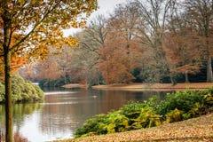 Forêt d'automne avec des branches d'arbre et des feuilles colorées Photos stock