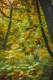 Forêt d'automne avec des feuilles de jaune et de vert des arbres Image stock
