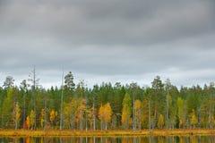 Forêt d'automne avec le ciel bleu et les nuages blancs Les arbres d'automne dans l'automne de forêt de la Finlande aménagent en p Images stock