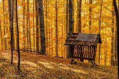 Forêt d'automne avec le conducteur animal images libres de droits