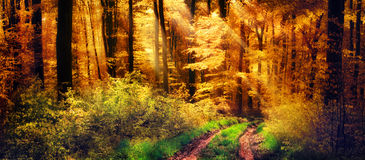 Forêt d'automne avec les rayons de la lumière chauds photographie stock