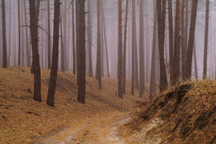 Forêt d'automne dans la brume de matin Photo stock