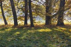 Forêt d'automne dans le contre-jour Photo libre de droits
