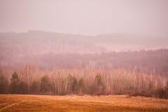 Forêt d'automne dans les montagnes Images libres de droits