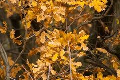 Forêt d'automne dans les montagnes de Pilis Photographie stock