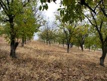 Forêt d'automne de noix Photo stock