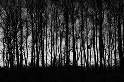 Forêt d'automne en bois noire et blanche Photographie stock