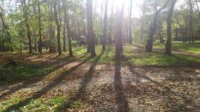 Forêt d'automne en prisme de lumière du soleil Image stock