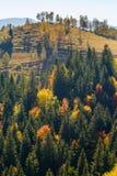 Forêt d'automne en Roumanie Photographie stock libre de droits