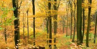 Forêt d'automne en vallée photographie stock libre de droits
