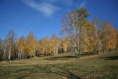 Forêt d'automne et ciel bleu Photos stock