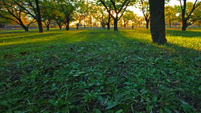 Forêt d'automne. 4K. PLEIN HD, 4096x2304. banque de vidéos