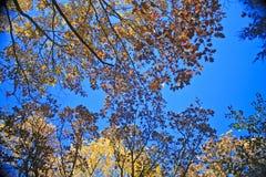 Forêt d'automne, le Wisconsin Photo stock