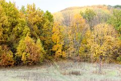 Forêt d'automne pendant l'après-midi photos libres de droits