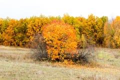 Forêt d'automne pendant l'après-midi photo stock