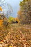Forêt d'automne pendant l'après-midi image stock