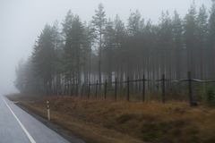 Forêt d'automne pendant le brouillard lourd Photo stock