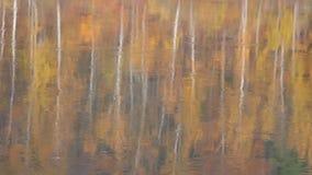Forêt d'automne reflétée en rivière le matin brumeux avec le brouillard et le chant d'oiseau clips vidéos