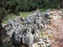 Forêt d'ayin de ` de Rosh ha photographie stock libre de droits