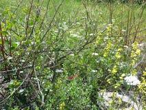 Forêt d'ayin de ` de Rosh ha photo libre de droits