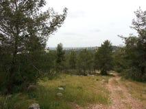 Forêt d'ayin de ` de Rosh ha Image stock