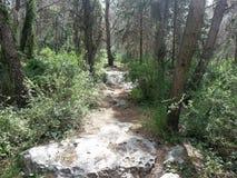 Forêt d'ayin de ` de Rosh ha photos libres de droits