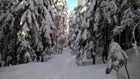 Forêt d'hiver à Washington photographie stock libre de droits