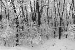 Forêt d'hiver Photos stock