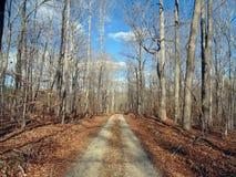 Forêt d'hiver Images stock