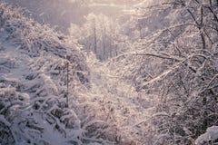 Forêt d'hiver après tempête de pluie verglaçante photos stock