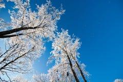 Forêt d'hiver, arbres dans le paysage de neige Images stock